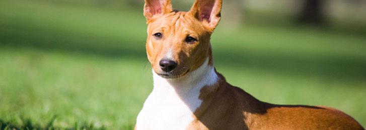 Benessere animale e canili