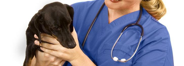 Elenco dei veterinari, delle pensioni e dei canili