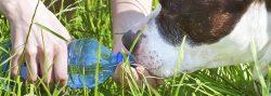 Associazione Nazionale Protezione Animali Natura Ambiente (ANPANA)