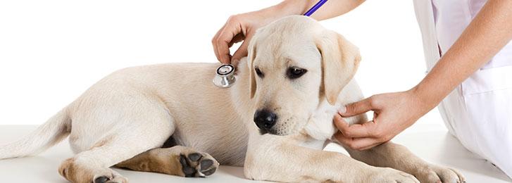 Associazione Nazionale Protezione Animali e dell'Ambiente (ANPA)