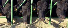 Servizio Veterinario – Area C, Igiene degli allevamenti e delle produzioni zootecniche