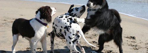 animali_daffezione_anagrafe_canina